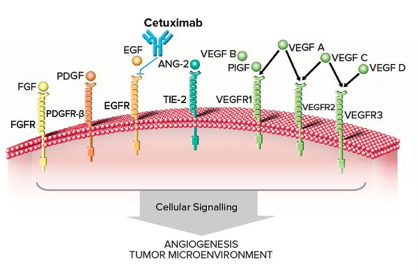 Drug Targets Cetuximab