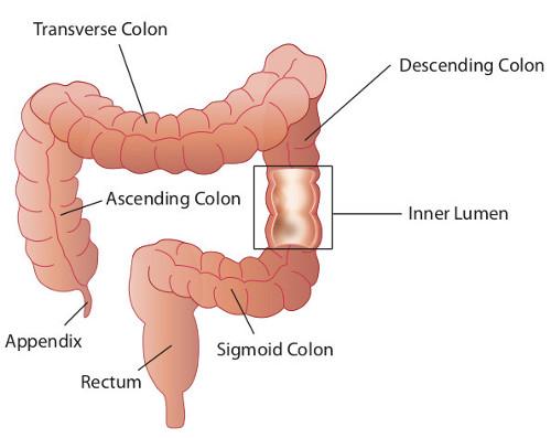 Colon line near anus